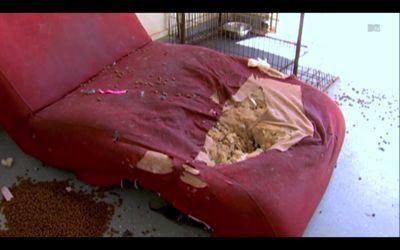 It looks like Kieffer's been sleeping in Jenelle's garage.
