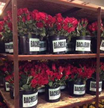 Some of the many roses that will be used on the 'Bachelor' float...